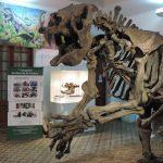 museo antrop cdia